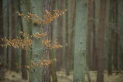 Tenczyński Park Krajobrazowy. Okolice Tenczynka. Marzec 2021