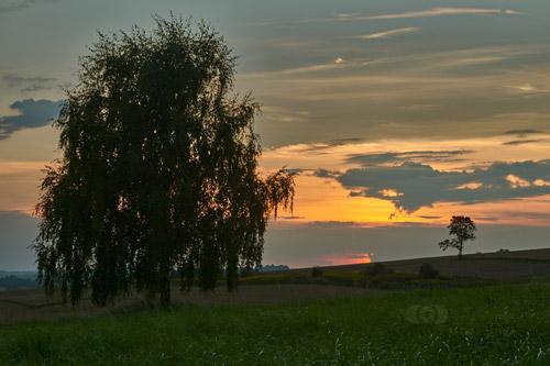 Dwa drzewa o zachodzie słońca.